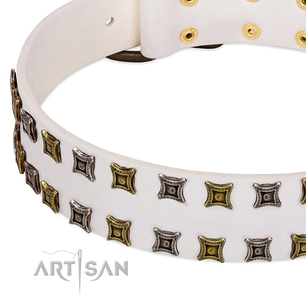 Natural leather dog collar with studs for your beautiful canine
