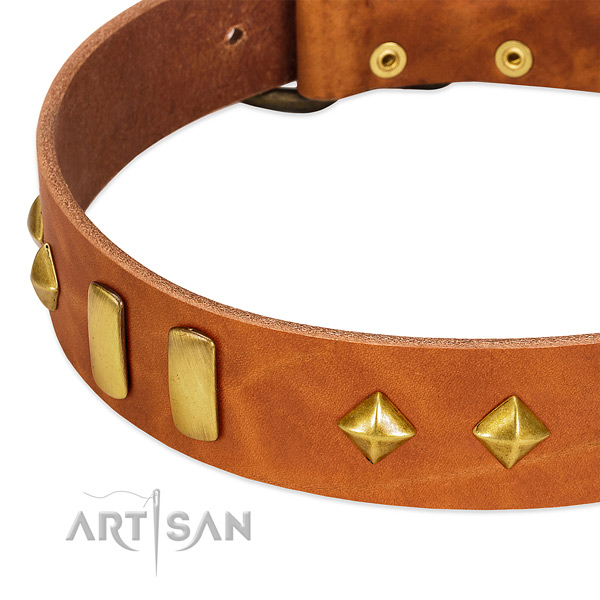 Daily use natural leather dog collar with exceptional adornments