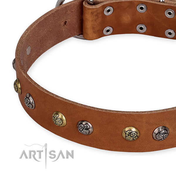 Full grain genuine leather dog collar with trendy reliable embellishments