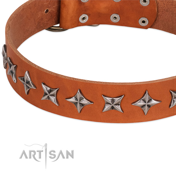 Daily walking studded dog collar of quality genuine leather