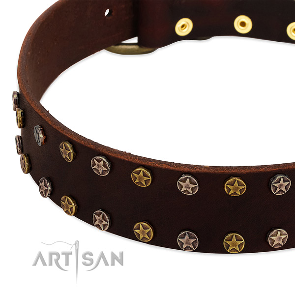 Everyday walking full grain genuine leather dog collar with unusual studs