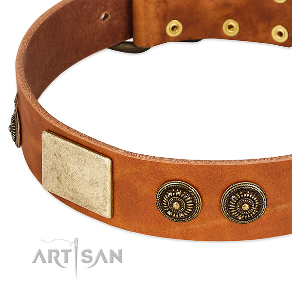 Stylish design dog collar created for your beautiful doggie