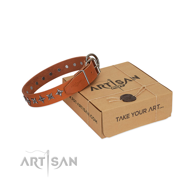 Everyday walking dog collar of top quality leather with studs