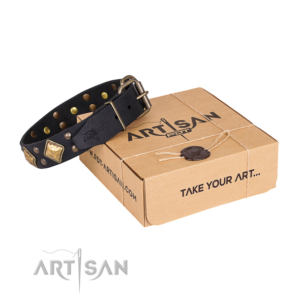 Basic training dog collar with Stunning corrosion resistant adornments