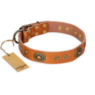 """Dandy Pet"" FDT Artisan Handcrafted Tan Leather Dogue de Bordeaux Collar"