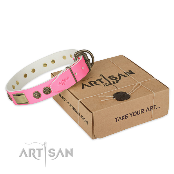 Durable studs on dog collar for everyday walking