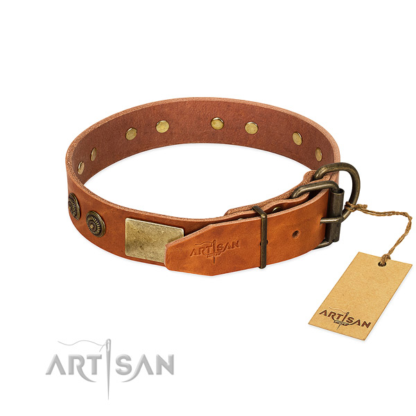 Corrosion proof fittings on full grain leather collar for everyday walking your dog