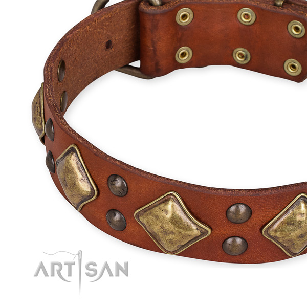 Leather collar with rust resistant fittings for your impressive pet