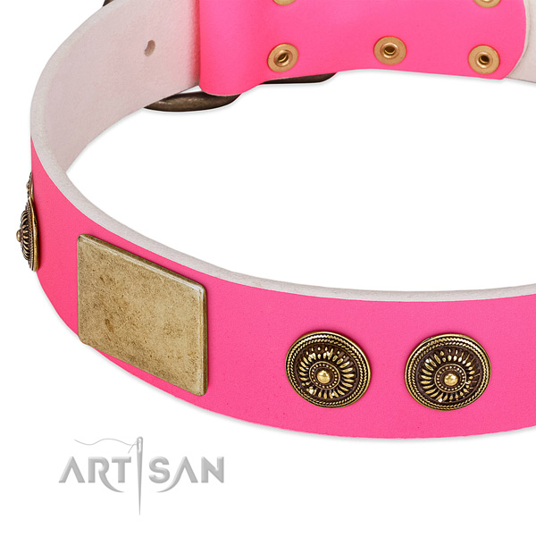 Studded dog collar made for your beautiful dog