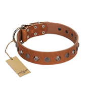 """Silver Age"" Fashionable FDT Artisan Tan Leather Dogue de Bordeaux Collar with Silver-Like Studs"