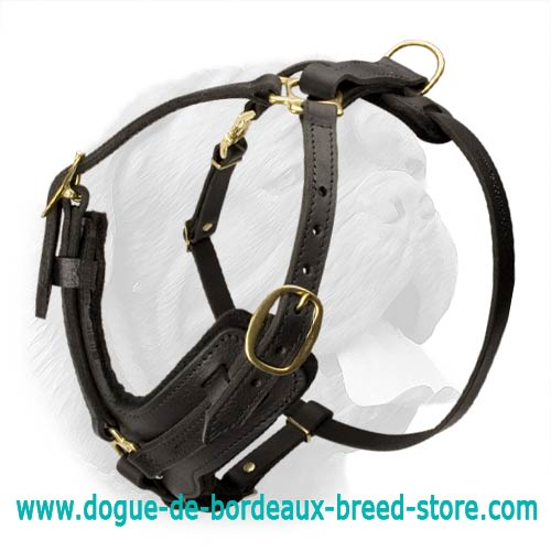 leather dog harness with brass plated fittings and durable refined design for walking and training stylish dogue de bordeaux