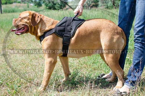 Dog Harness for Dogue de Bordeaux Pulling and Tracking Work