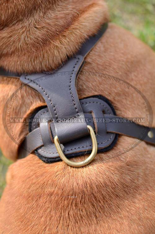 Comfy Padded Leather Dog Harness with Brass Studs Decoration for French Mastiff