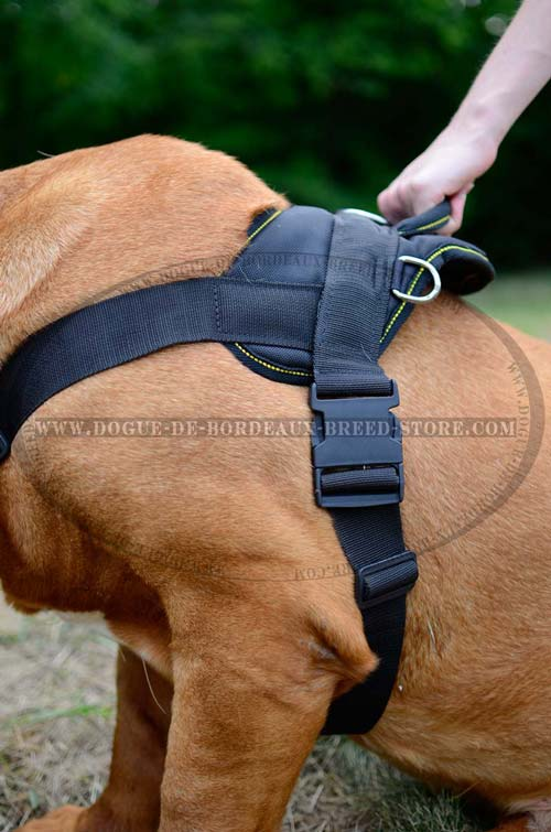 Dogue de Bordeaux Breed Harness Designed not to Restrict Dog Movements