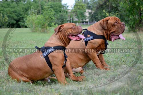 Light Weight Nylon Tracking Dog Harness for Dogue de Bordeaux
