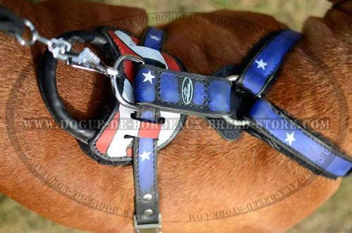 Dogue de Bordeaux Breed Leather Harness with Wide Straps Stitched for Additional Durability