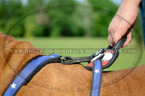 Dogue de Bordeaux Breed Leather Harness with Wide Chest Plate  Stitched for Additional Durability