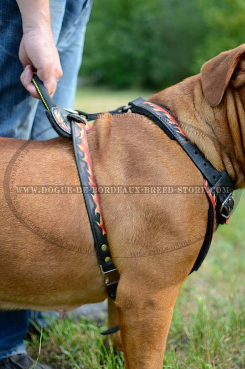 Handcrafted training-walking harness for Dogue de Bordeaux breed