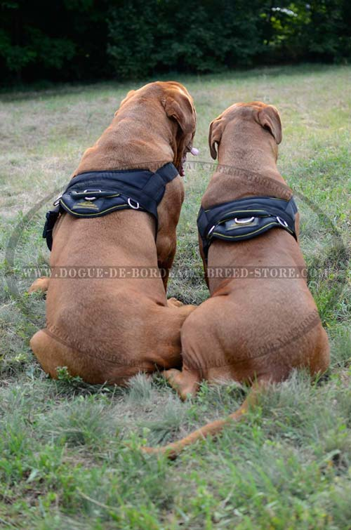 Strong Nylon Harness for Dogue de Bordeaux