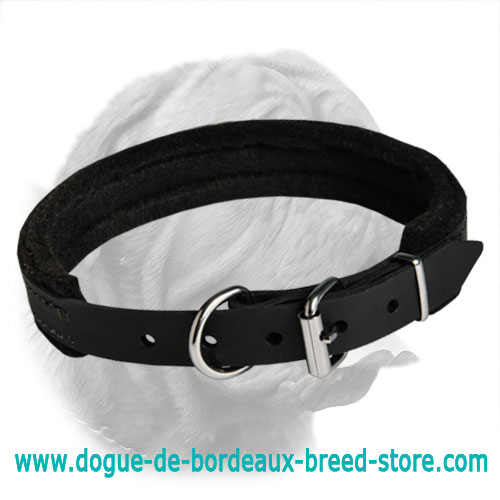 Dependable Padded Leather Collar for Dogue de Bordeaux