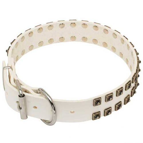 Impressive White Dogue de Bordeaux Collar for Special Dogs
