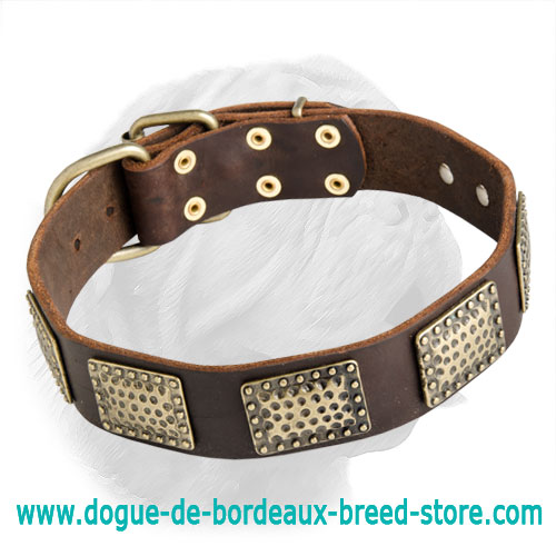 Awesome Dogue de Bordeaux Collar with Brass Plated Adornment
