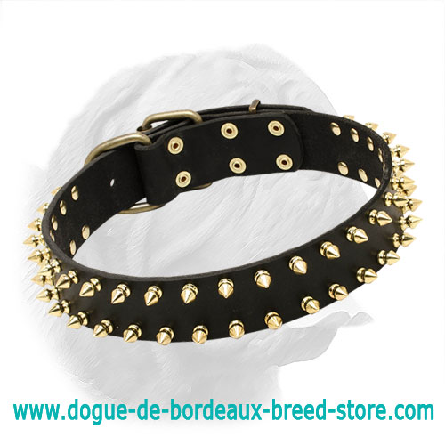 Leather Special Dogue de Bordeaux Collar With Golden-Like Spikes