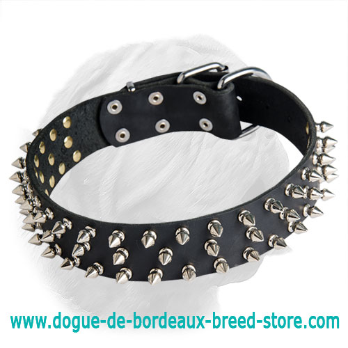 Leather Spiked Collar for Dogue de Bordeaux