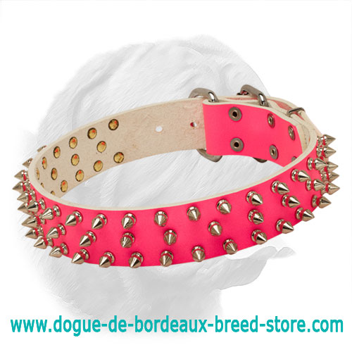 Glamorous Dogue de Bordeaux Spiked Collar