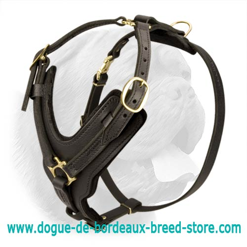 luxury handcrafted leather dog harness with brass plated hardware for walking and training