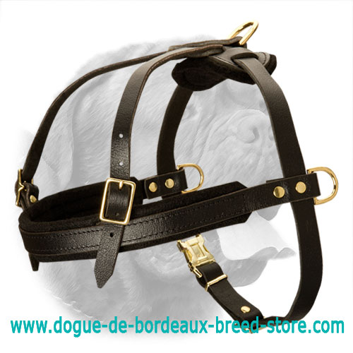 Tracking/Pulling Leather Dog Harness for Dogue De Bordeaux