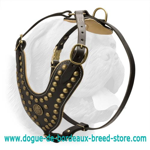 Imperial Style Leather Dog Harness with Brass Fittings for Dogue de Bordeaux