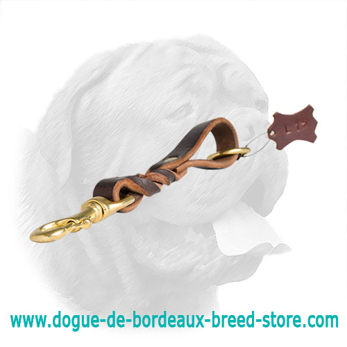 Short leather dog leash for Dogue de Bordeaux