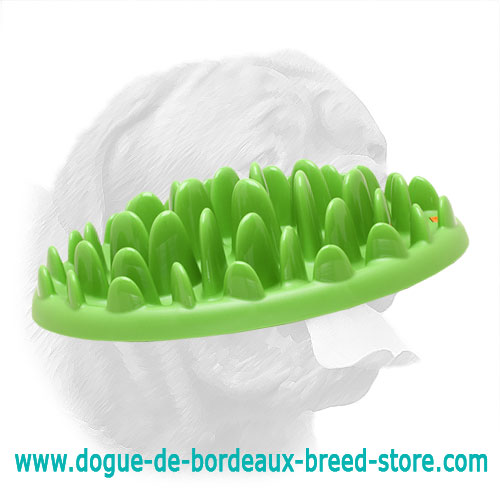 Green Grass Puppy Feeder for Healthier Eating