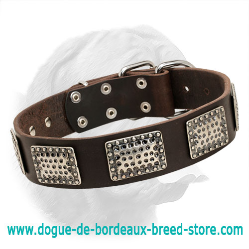 Strong Leather Dogue de Bordeaux Collar with Nickel Plated Hardware