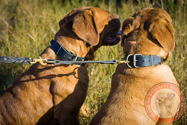 Dogue de Bordeaux leather leash with rust-proof brass plated hardware for improved control